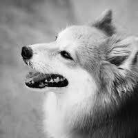 Pies - najwierniejszy i najlepszy przyjaciel człowieka