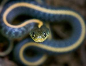 Mniej powolna śmierć chomika w żołądku węża