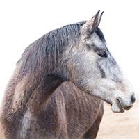 Miłośnicy koni i kuców