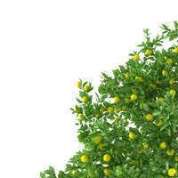 Fani lemonowego drzewa ( ͡° ͜ʖ ͡°)