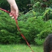Ci co kochają owczarki niemieckie i inne psy