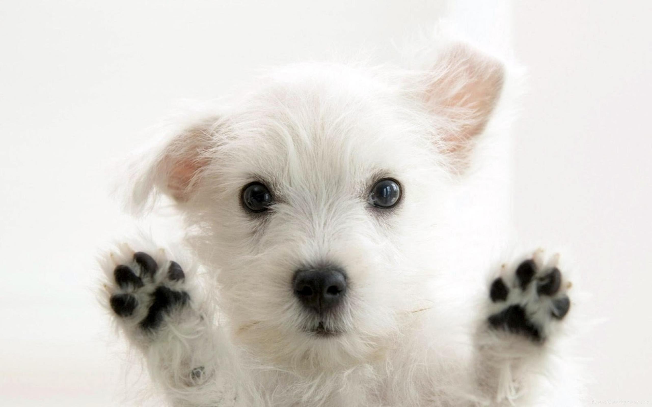 Mamy psy. :)