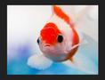 Małe Zoo - hurtownia ryb akwariowych