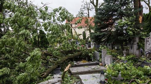 Zniszczenia po nawałnicy na cmentarzu św. Piotra i Pawła w Gnieźnie (fot. PAP/ Marek Zakrzewski)