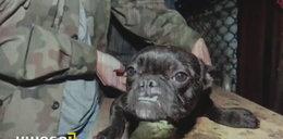28 psów wyciągnęli z piekła. Teraz sąd nakazał coś niepojętego!