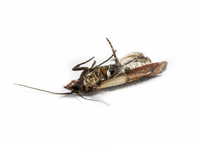 GENIJALAN NAČIN da se zauvek otarasite moljaca: OVA STVAR će ih oterati zauvek iz vašeg doma