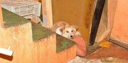 Makabra w Małopolsce. Kobieta trzymała w mieszkaniu 60 kotów i 19 psów
