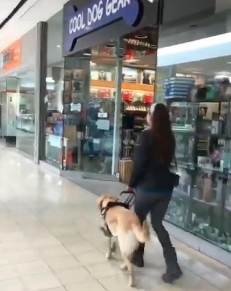 Labrador pas vodič prodavnica za kućne ljubimce prtscn
