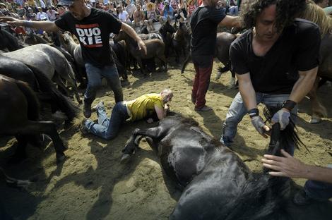 Preko 500 divljih konja će ove godine biti ošišano i pregledano