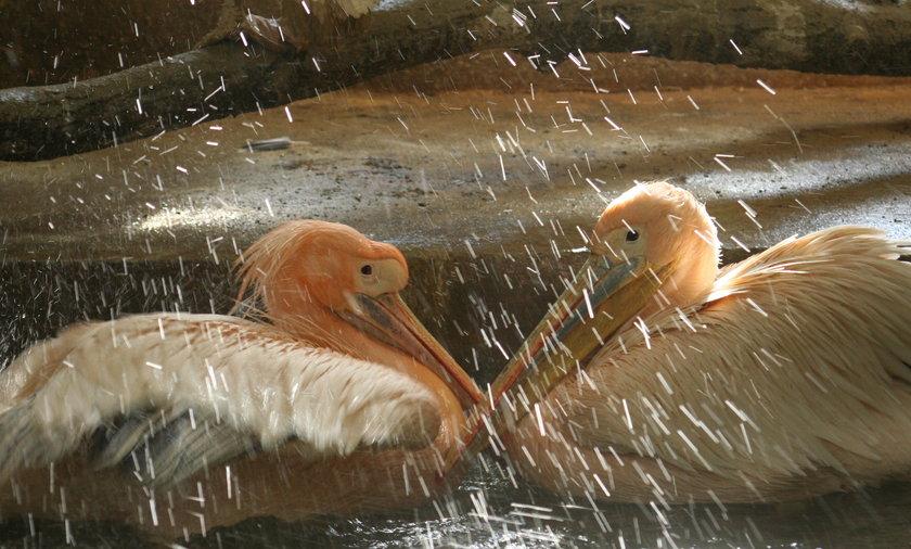 Walentynki w gdańskim zoo.