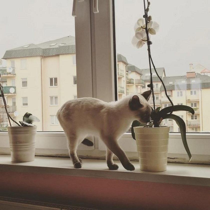 Mieszkanie najlepszej blogerki w Polsce. To kociara!