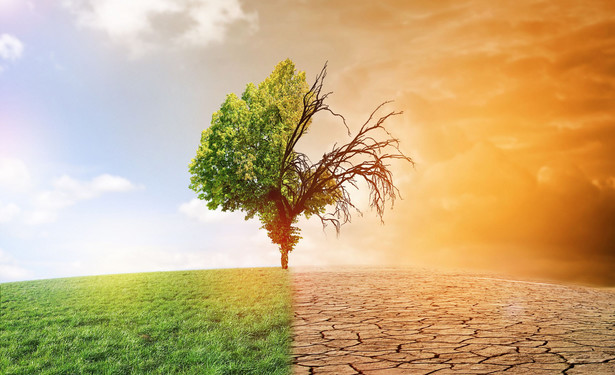Wójcik: Walka z globalnym ociepleniem nie musi oznaczać zerwania ze wzrostem gospodarczym