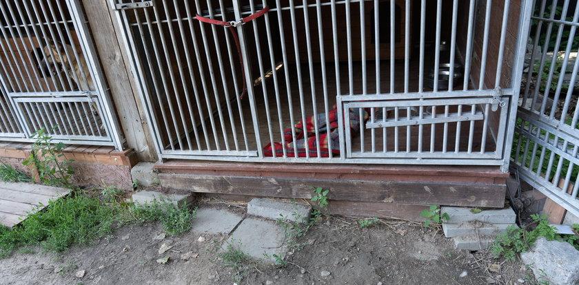 Co dzieje się w warszawskim schronisku? Zatrważające zarzuty wolontariuszy. Psia tragedia jeży włos na głowie