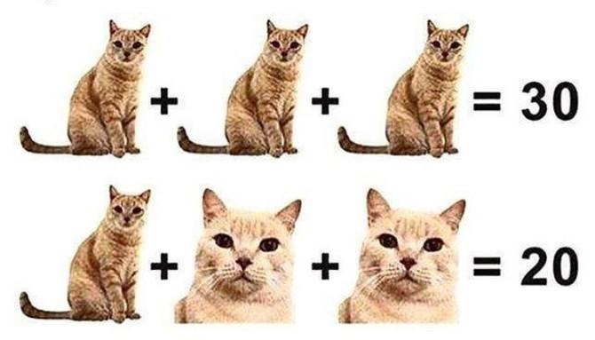 Koliko je mačaka na fotografiji