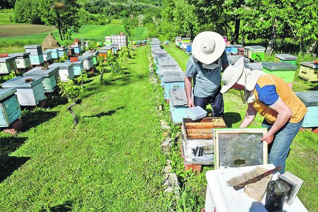 Ova porodica gaji sivku ili Kranjsku pčelu. Ona je priznata kao najbolja rasa pčela u svetu