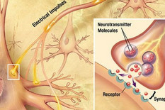 nervne ćelije