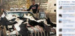Barbarzyństwo! Masowo mordują polskie bociany