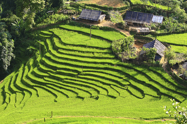 Tarasy ryżowe w Banaue