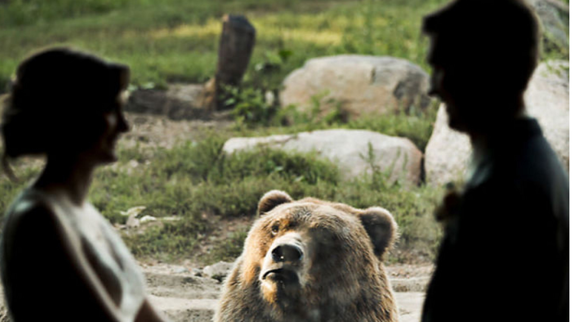 33a97c5227 Besírsz: így reagálnak az állatok a házasságkötésre - KÉPEK - Noizz