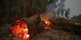 Tysiące żołnierzy w walce z pożarami lasów w Amazonii