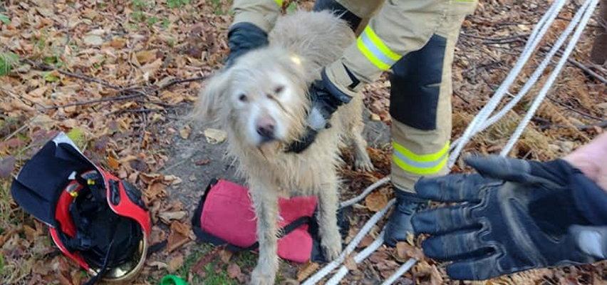 Pies wpadł do 4 metrowej studni. Cudem przeżył