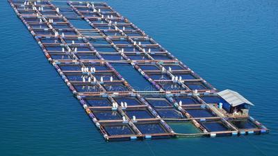 Tanzania introduces cage fish farming to grow the economy and increase the sector's contribution to the GDP