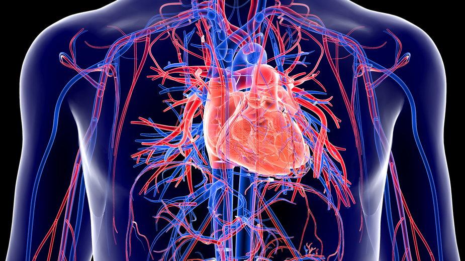 Choroby układu krążenia stanowią istotny problem zdrowotny na całym świecie