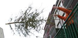 Co zrobić ze świąteczną choinką? Super pomysł!
