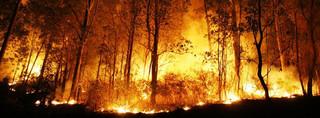 Rząd Australii nie widzi związku między pożarami a zmianą klimatu