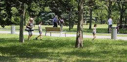 Wielki spór o miejskie trawniki. Kosić czy nie kosić?