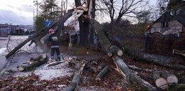 Anomalie pogodowe nad Polską. Wichury pustosząkraj