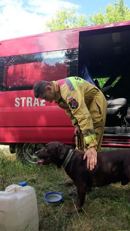 Ratownicy szkolili psy do egzaminu. Już niedługo przejdą najważniejsze testy