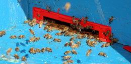 Hodował pszczoły od 40 lat. Sąd kazał mu się ich pozbyć