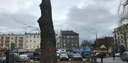 Wycięli drzewa na pl. Na Stawach