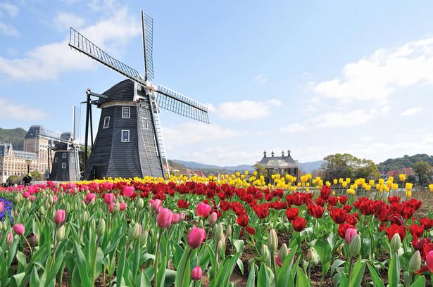 10. Holendrzy - średnio 170,2 tys. euro zgromadzonego majątku na gospodarstwo domowe