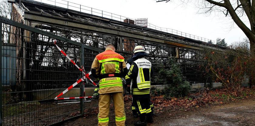 Tragiczny pożar w niemieckim zoo. Przyczynąpowietrzny lampion