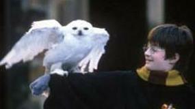 """""""Harry Potter"""" znów najlepszy"""