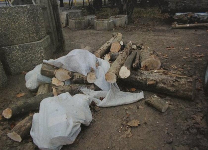 Bytom. Zatrzymanie złodziei wycinających drzewa