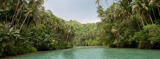 Las deszczowy w Amazonii - Teren ten zajmuje obszar siedmiu milionów kilometrów kwadratowych, z czego około 5,5 miliona kilometrów kwadratowych zajmuje amazoński las deszczowy. Wylesianie (często z powodu tworzenia nowych pastwisk i gruntów ornych) stanowi największe zagrożenie dla największej dżungli na ziemi. Przy obecnym tempie wylesiania, ponad połowa z 1,4 miliardów akrów lasów tropikalnych może zniknąć w 2030 roku.