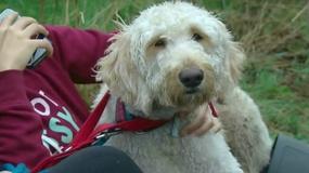 Pies wyruszył w podróż życia. Linie lotnicze wsadziły go do niewłaściwego samolotu