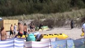 Dzik staranował turystów na plaży w Karwi
