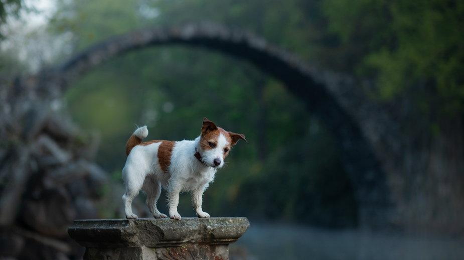 We Francji zagubiony pies pobiegł do domu 380 km (Zdjęcie ilustracyjny)