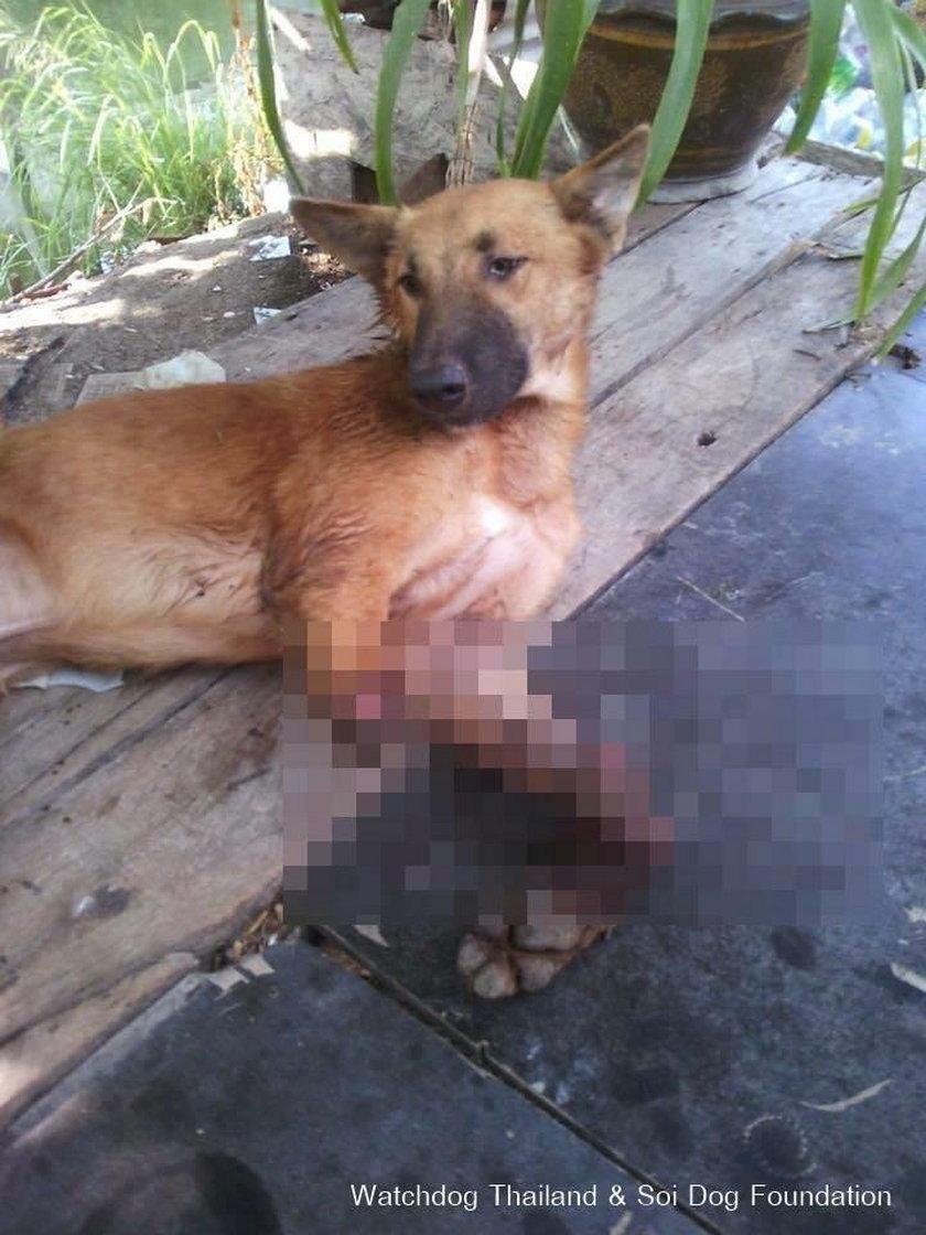 Pies Cola stracił obie łapy