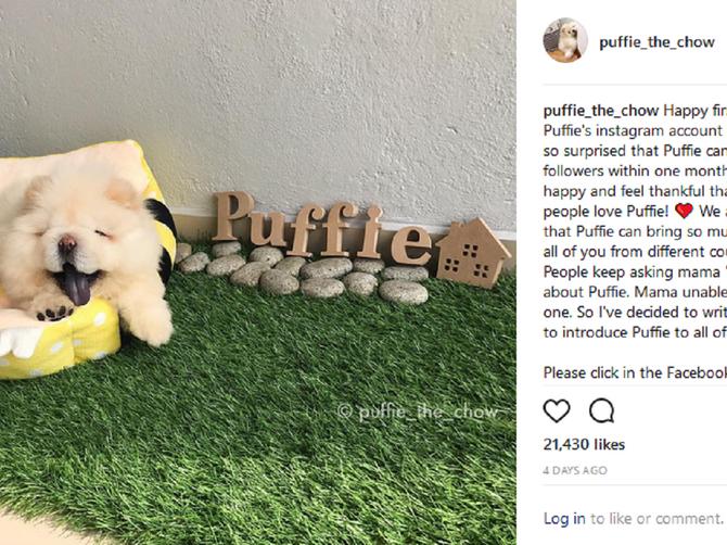 Upoznajte Pafija: Pas koji je internet SENZACIJA