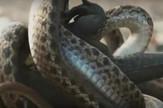 Iguana u zmijskom zahvatu
