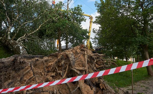 """""""Na terenie, przez który przeszła nawałnica powalonych jest kilka milionów metrów sześciennych drewna na tysiącach hektarów. Przy optymistycznym wariancie, miejscowi leśnicy uporają się ze szkodami do końca 2018 r."""" - powiedział w poniedziałek PAP Tomasz Liśkiewicz. Jak zaznaczył, """"takiej klęski w polskich lasach państwowych jeszcze nie było""""."""