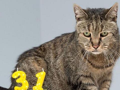 101f37bec821c Nie żyje Nutmeg, najstarszy kot świata. Przez swój wiek, rok temu został  wpisany do Księgi Rekordów Guinessa. Małżeństwo Liz i Ian Finlay z  Newcastle w ...
