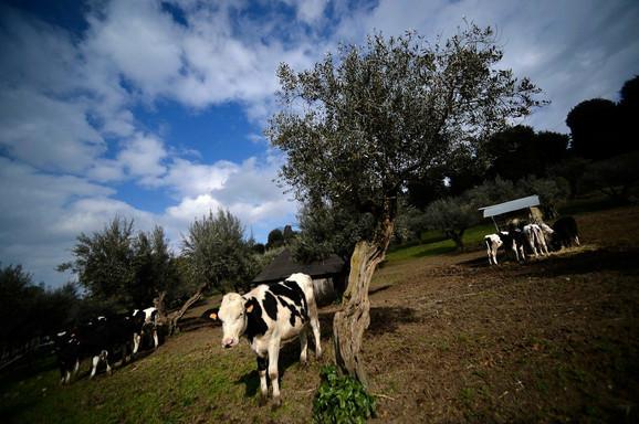 Papina farma u Kastelu Gandolfu