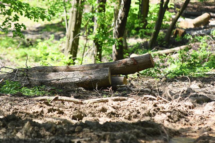 Novi Sad487 fruska gora seca sume drveca  foto Nenad MIhajlovic