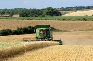 Po oszacowaniu strat w wyniku suszy rząd podejmie decyzje ws. pomocy rolnikom